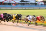 Internet and Greyhound Racing